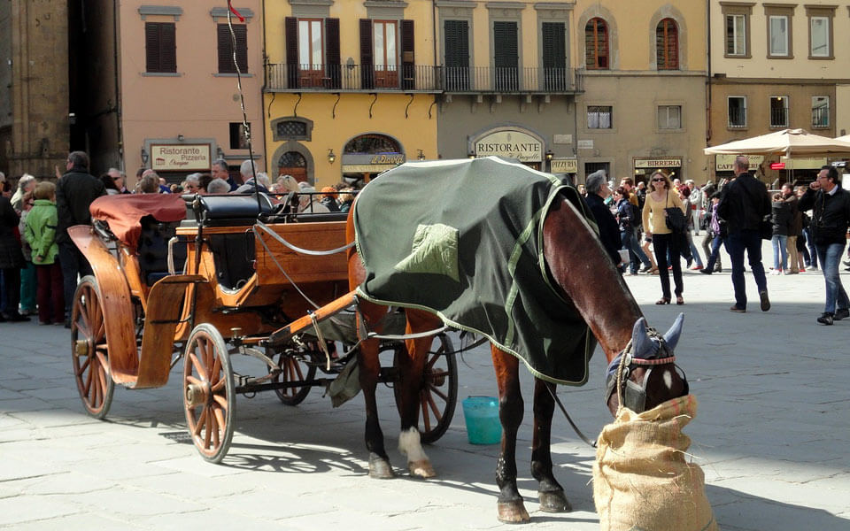 wine tour adventure - tuscany - florence horse